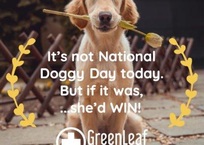 nationaldog